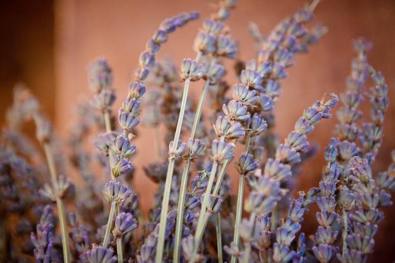 Chileno Valley Ranch Wedding Photographer Lavender DIY Bouquets at Barn Wedding