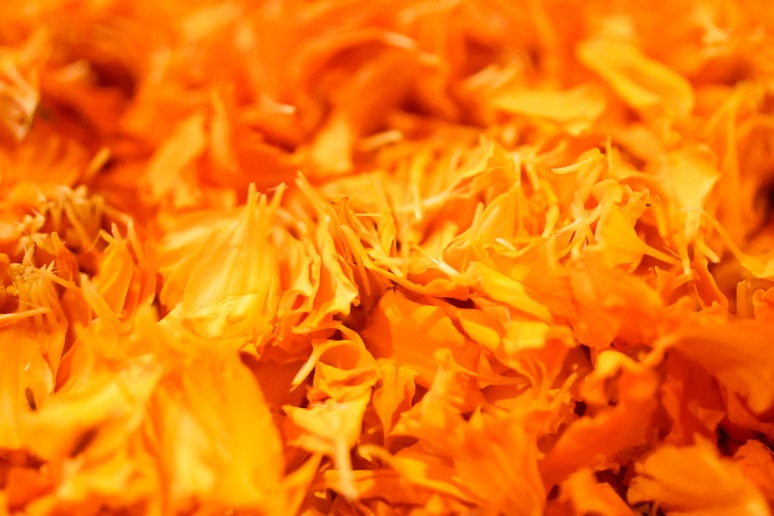 New Delhi Indian Wedding Photographer Grace Havlak Marigold Petals