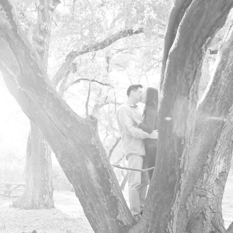 Los Angeles Engagement Session Malibu Wedding Couple in Tree