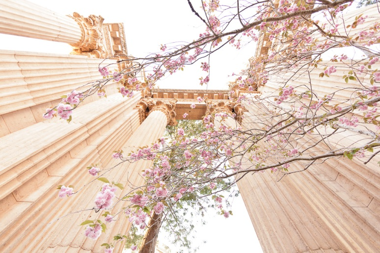 San Francisco Wedding Photographer Palace of Fine Arts