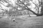 21-San-Francisco-Bay-Area-San-Jose-Wedding-Photographer-Livermore-Engagement-Session