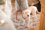 11-San-Francisco-Mendocino-Coast-Sea-Ranch-Lodge-Bohemian-Vintage-Gualala-Photojournalist-Wedding-Photographer
