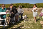 24-San-Francisco-Mendocino-Coast-Sea-Ranch-Lodge-Bohemian-Vintage-Gualala-Photojournalist-Wedding-Photographer